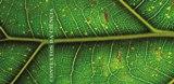 Ciência, Natureza e Sociedade: diálogo entre saberes