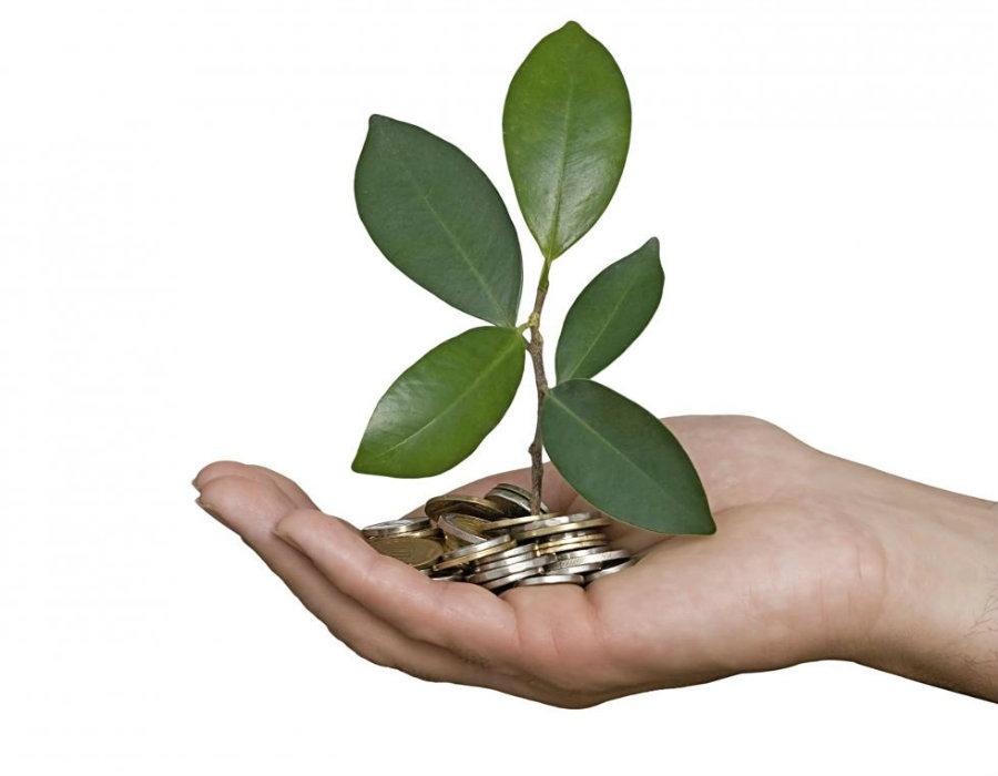 """O que se entende por """"financeirização da natureza""""? Por Amyra El Khalili"""