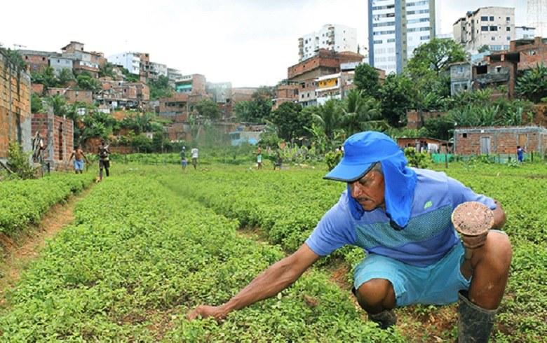 Agricultura urbana corre riscos com políticas do governo Bolsonaro